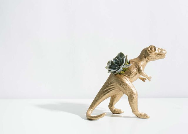 The Rex with Succulent Product Photo